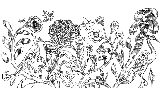 a3-birds-and-plants-drawing-acc-2013-217-cropped
