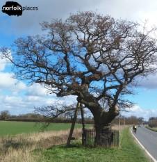 Kett's Oak, Wymondham